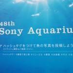 銀座に美ら海水族館がやってくる「48th Sony Aquarium」に行ってきた