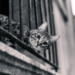 映画「世界から猫が消えたなら」の試写を見て