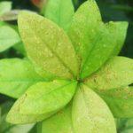 熱帯植物をみることができる「夢の島熱帯植物館」へいってきた