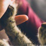 映画「ボブという名の猫 幸せのハイタッチ」の試写をみて