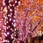 冬の桜「目黒川みんなのイルミネーション2017」今年も開催