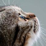 映画「猫が教えてくれたこと」の試写を見て