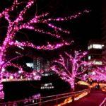 冬のお花見「目黒川みんなのイルミネーション2017」へ