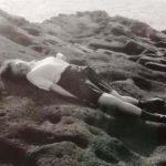 蓮井元彦「Deep Blue – Serena Motola」へ