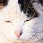 TOBICHIのあそび場「猫のぽー 」