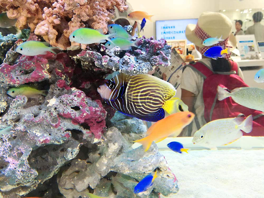 toomilog-sony_aquarium2017_016