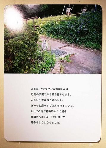 toomilog-tobichinoasobiba_yoshitakesinsuke_014