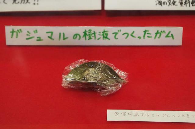 toomilog-kaichu-IMGP9401