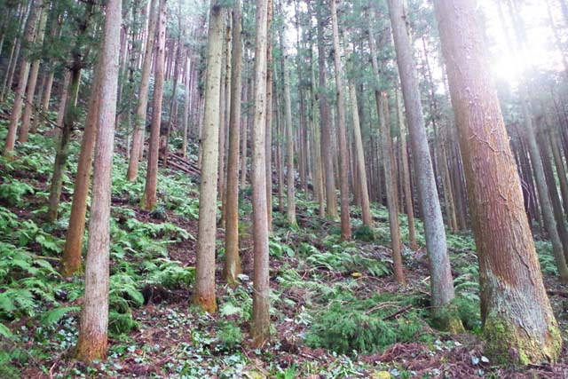 toomilog-ogosekuroyama003