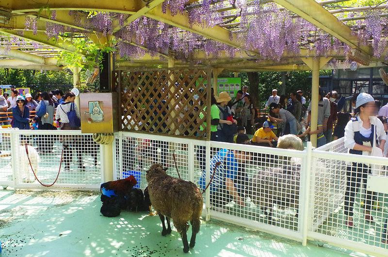 toomilog-edogawaku_zoo032