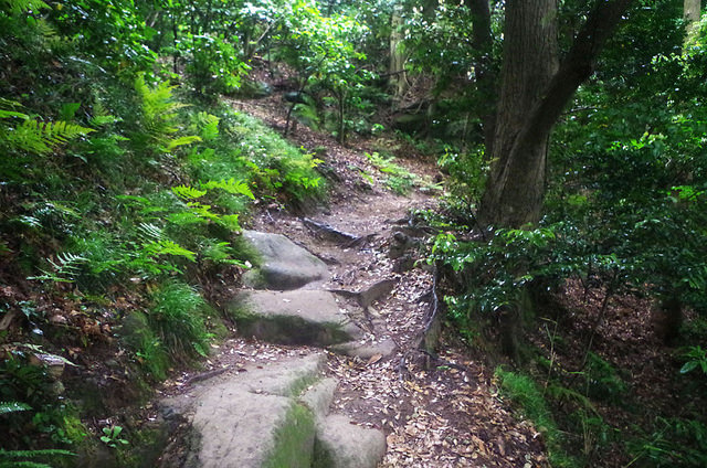 toomilog-tengoku_Hiking_trail028