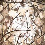 ガラス作家イイノナホさん個展「時の花 -イイノナホ展-」へ