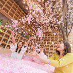 桜の花びらが舞い散る空間でチルアウトな花見体験ができるイベントが開催