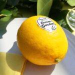 ハーゲンダッツのガーデンパーティーをイメージした「Häagen-Dazs Weekend Lemon Garden」へ