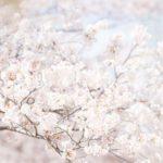 表参道ヒルズ館内がsansanのお花見スポットになっていました